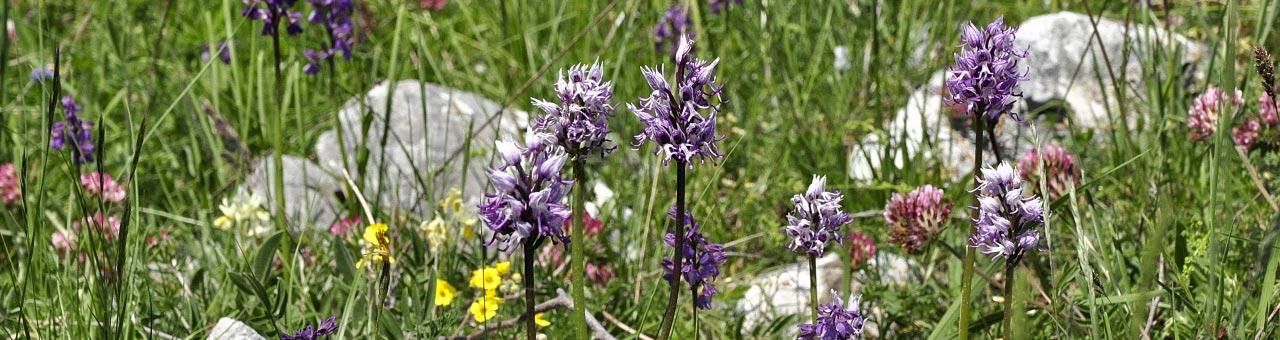 Tal der Orchideen Cilento Sassano